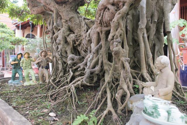 Mục sở thị những 'siêu cây' của lão nông tỷ phú Hà thành
