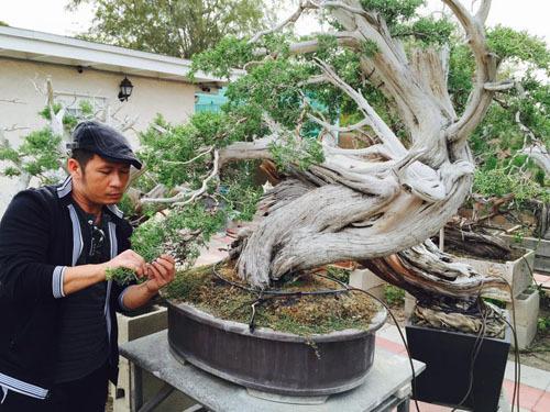 Khu vườn đầy ắp hoa trái trong biệt thự của Thanh Thảo, Quang Lê ở Mỹ