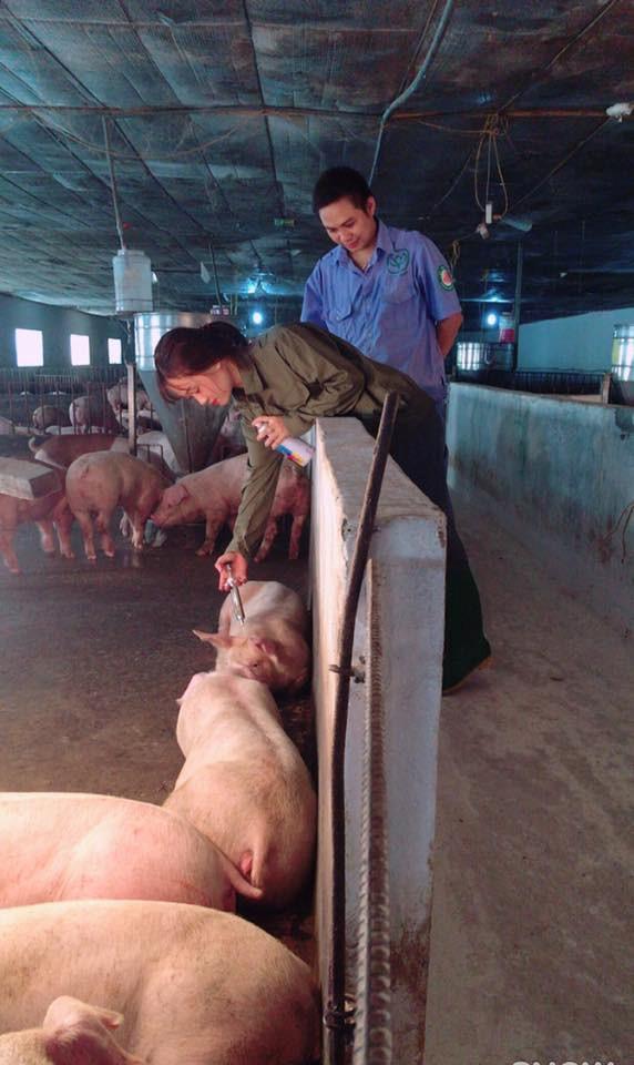 'Cô gái chăn heo' bị trêu chọc sau bức ảnh xinh đẹp tại trang trại