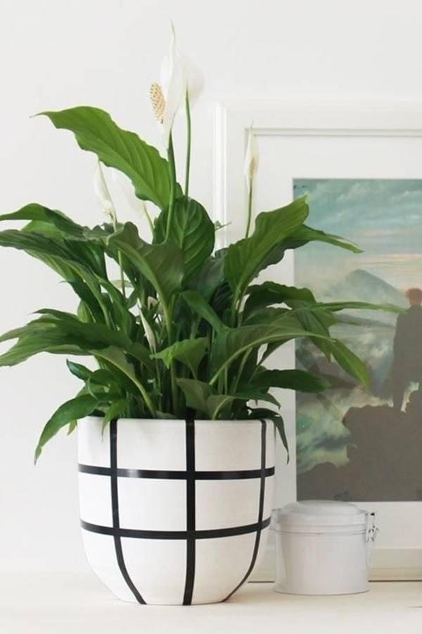 9 loại cây trồng lý tưởng dành cho những ngôi nhà nhỏ