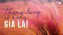 Khám phá thung lũng cỏ hồng mộng mơ hút hồn giới trẻ