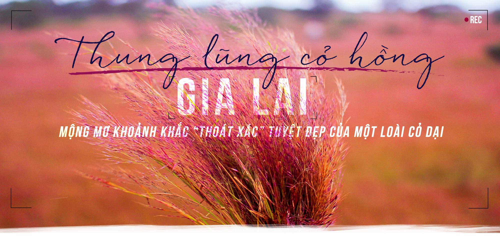 Thung lũng cỏ hồng,Du lịch,Gia Lai