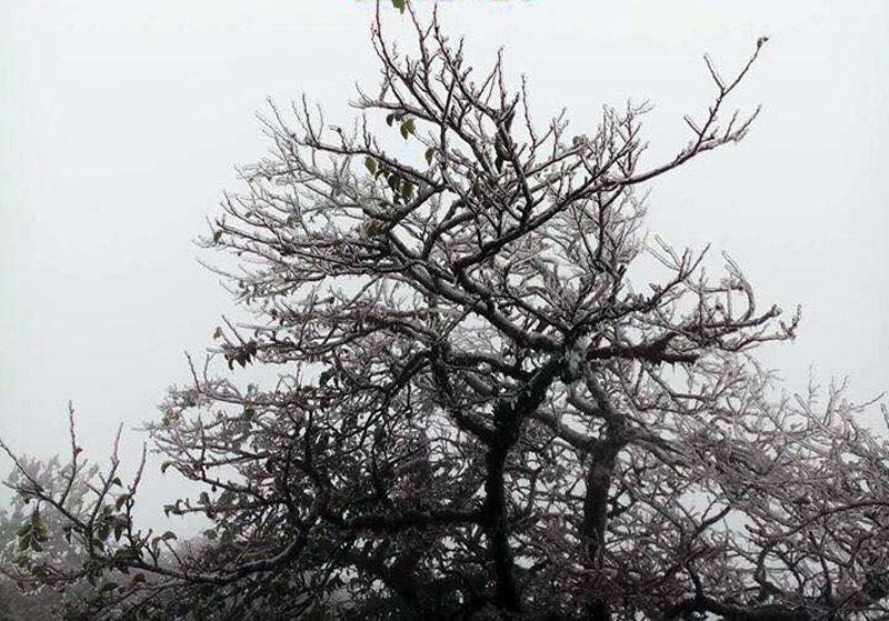 băng tuyết,Cao Bằng,đỉnh núi Phia Oắc,thời tiết miền Bắc,đỉnh Phia Oắc