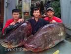 'Thủy quái' cá leo hơn1 tạ xuất hiện: Dân sành Thủ đô xôn xao
