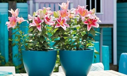 hoa dễ trồng đón Tết