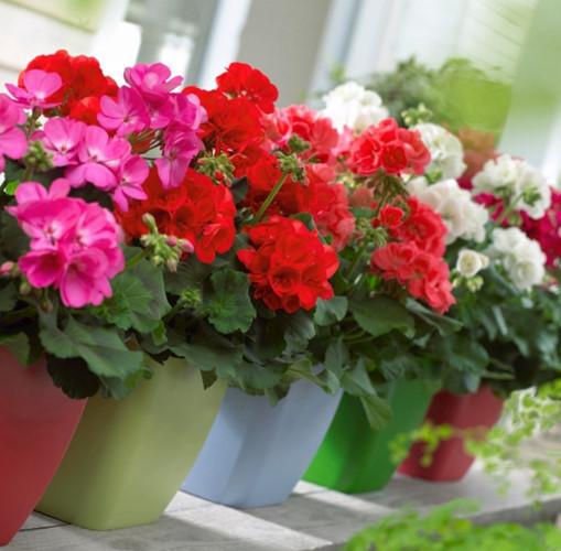 10 loại hoa dễ trồng, bạn nên thử ngay để đón Tết