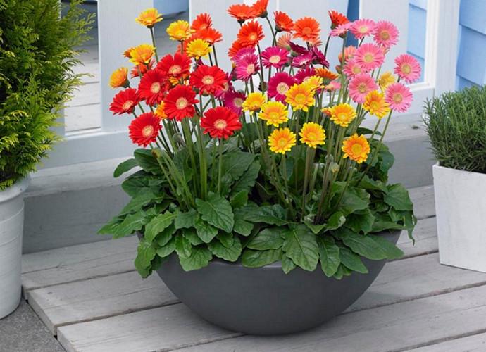hoa cảnh Tết