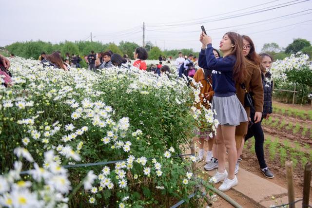 """Hàng nghìn người đổ về chụp ảnh, vườn cúc họa mi """"vỡ trận"""" vì tắc nghẽn"""