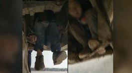 Chui dưới gầm xe buýt hàng trăm cây số đi gặp cha mẹ