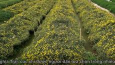 Đột nhập làng thuốc 1.000 năm tuổi ở Hưng Yên