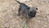 Chàng trai cấp cứu thành công cho cún con bị đuối nước