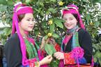 Rực rỡ lễ hội Trà hoa vàng Ba Chẽ, Quảng Ninh