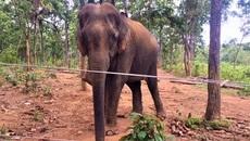 Trung tâm bảo tồn xin voi để...bảo tồn