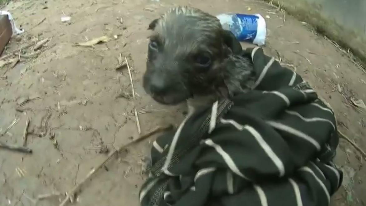 Lay động cảnh chàng trai ra sức cứu sống chó con đuối nước