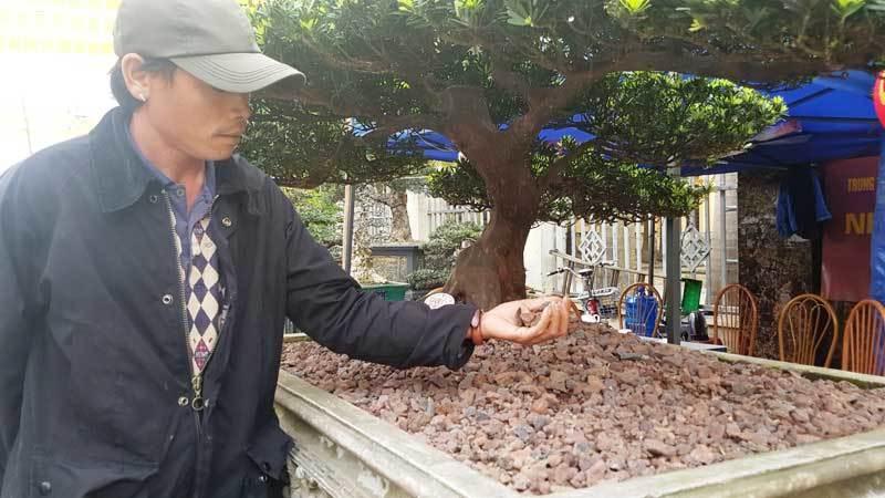 siêu cây cảnh,nham thạch,siêu câu kim cương,Hà Nội