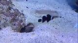 Chết cười với 2 chú cá lầy lội nhất hành tình