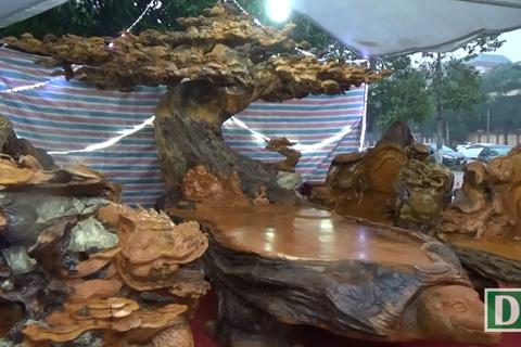 Chiêm ngưỡng bộ bàn ghế 'tứ linh' bằng gỗ trai nghìn năm giá gần 3 tỷ
