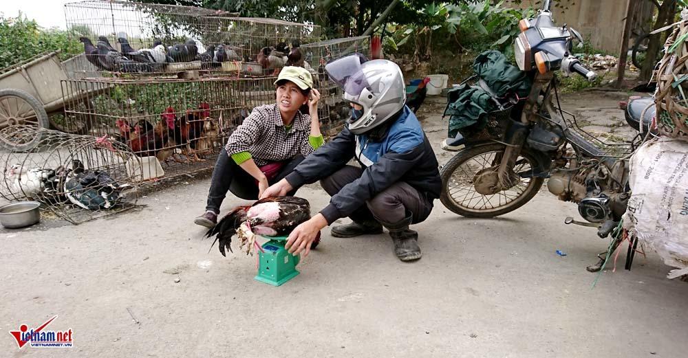 gia cầm,chợ gia cầm,Hà Nội,Đại lộ Thăng Long