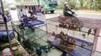 Cắt tiết gà, vặt lông chim bên đại lộ hiện đại nhất Việt Nam