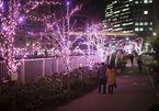 Bí mật phố hoa anh đào mùa đông tại Nhật Bản