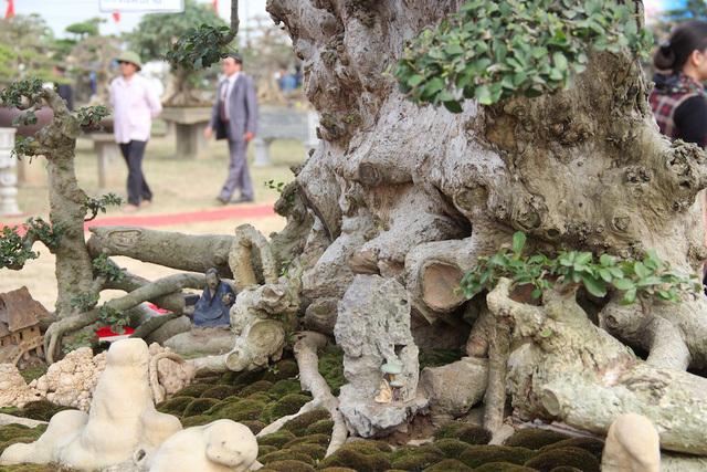 Đại gia xếp hàng 2 năm, cõng bao tải tiền mua cây duối cổ trăm năm - ảnh 4
