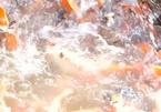 Đàn cá Koi tiền tỷ bơi trên sông Hồng: Tay chơi thèm muốn