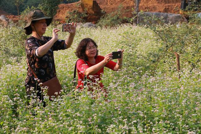 Hoa  Tam Giác Mạch,Ninh Bình