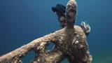 Phát hiện bức tượng kỳ lạ đội mũ dưới đáy biển Ai Cập