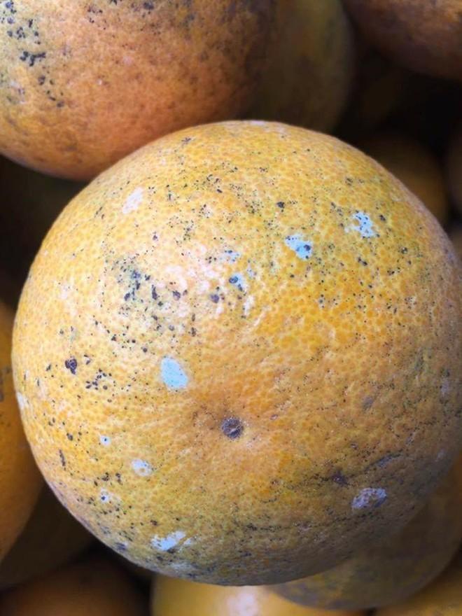 Đốm xanh như mốc trên vỏ cam có phải do tiêm hóa chất độc hại?