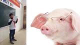 Không nhịn được cười với bài văn tưởng tượng biến thành... lợn của học sinh lớp 6