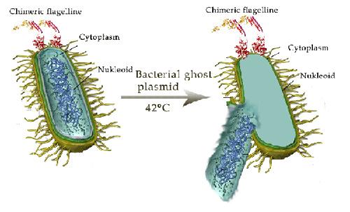 Chuyên gia nói về Ly giải vi khuẩn hô hấp cho trẻ