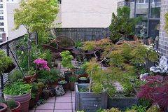 Bí quyết phong thủy khi trồng cây trên sân thượng