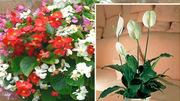 Hút chất độc thuộc hàng top, trồng những cây này trong nhà không chỉ đẹp mà còn rất tốt cho sức khỏe
