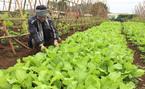 Lồng ghép nông nghiệp hữu cơ trong xây dựng nông thôn mới