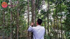 Mở rộng cơ hội sử dụng trầm hương cho người Việt