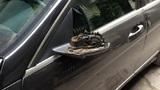"""Cận cảnh bắt trộm chuyên """"vặt"""" gương xe ô tô"""