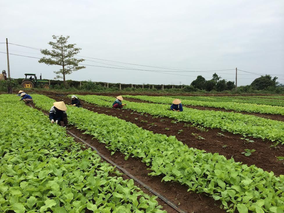 nông nghiệp hữu cơ,nông nghiệp việt nam,thủ tưởng nguyễn xuân phúc