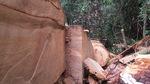 Bắt tạm giam 2 trạm trưởng bảo vệ rừng ở Nghệ An