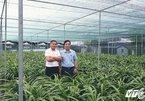 Lão nông nho nhã, chủ vườn lan trăm tỷ lớn nhất Việt Nam