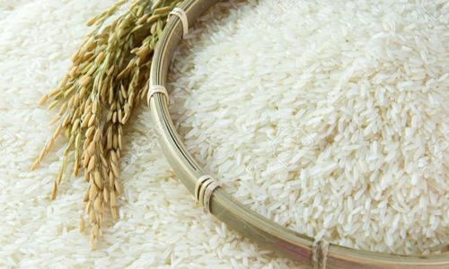 2017- năm tiến bước của lúa gạo Việt Nam