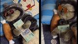 """""""Phát hờn"""" trước chú mèo giàu có và sành điệu này..."""