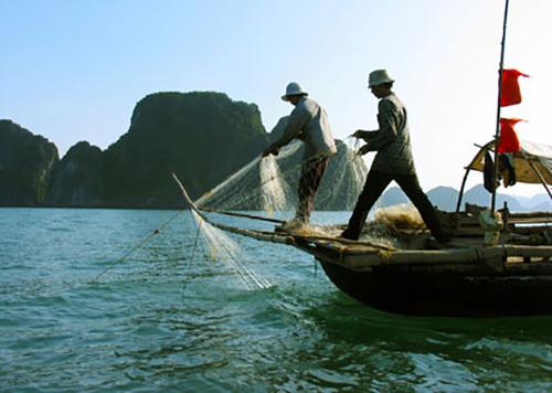 Dừng hoạt động khai thác thủy sản vùng lõi Vịnh Hạ Long