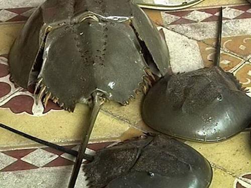 Hai người bị liệt toàn thân do ăn so biển