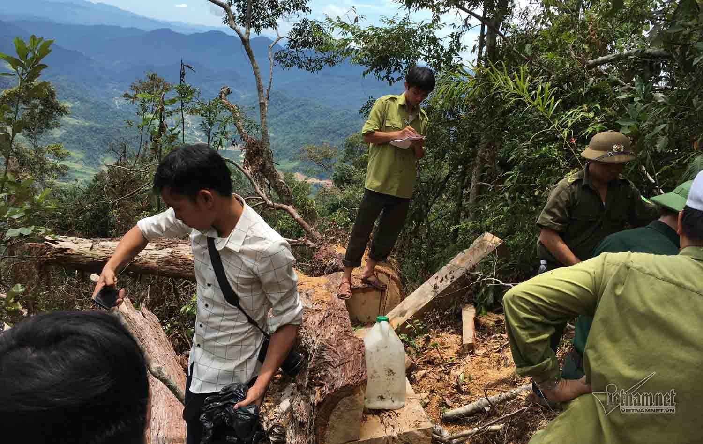 phá rừng,Nghệ An,Kiểm lâm,lâm tặc