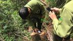 Nghệ An kỷ luật đảng quyền trưởng đồn biên phòng vụ phá rừng