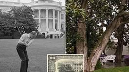 Bà Trump ra lệnh chặt cây được in trên tờ 20 đôla