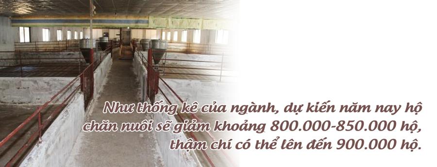 thịt lợn,ngành chăn nuôi,chăn nuôi lợn,giải cứu nông sản,giải cứu thịt lợn