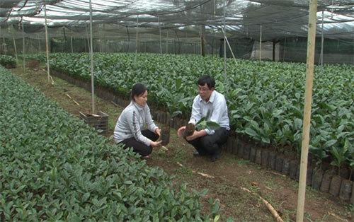 VnSAT chứng nhận cho 21 vườn ươm giống cà phê đạt chuẩn