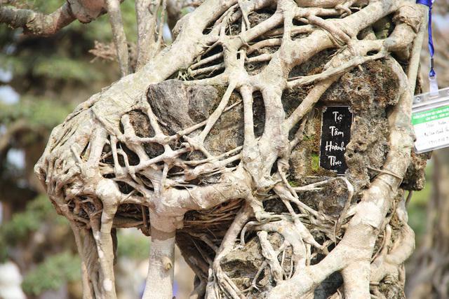 Chiêm ngưỡng kiệt tác sanh cổ gây 'chấn động' trong giới chơi cây