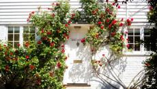 Muôn kiểu trang trí mặt tiền nhà với hoa cực hút mắt